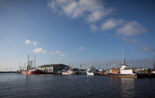 Gratis stockfoto met agbiopix, aquacultuur, commerciële visconservenfabriek, vissen