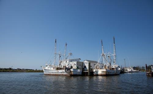 Gratis stockfoto met agbiopix, aquacultuur, commerciële visserij