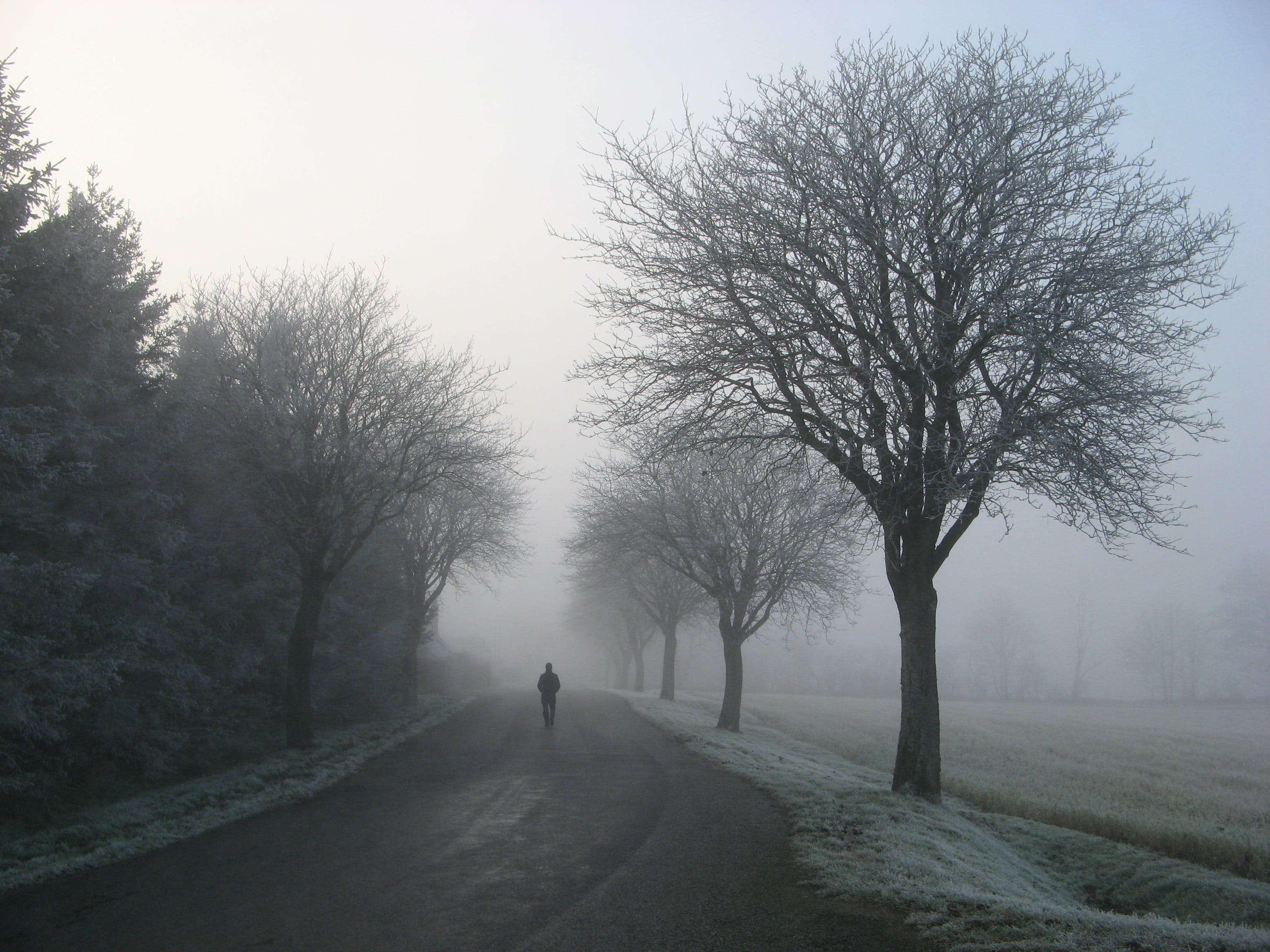 Person Walking on Road Between Trees