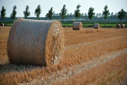 Ingyenes stockfotó mező, szalmabálák, szénabála, vidék témában