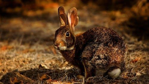 Ilmainen kuvapankkikuva tunnisteilla eläin, eläinkuvaus, jänis, kani