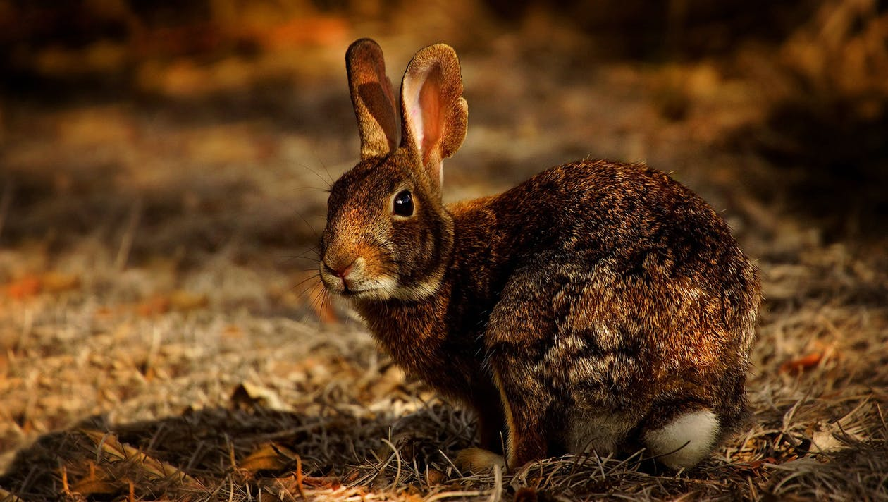 Close-Up Photo of Rabbit