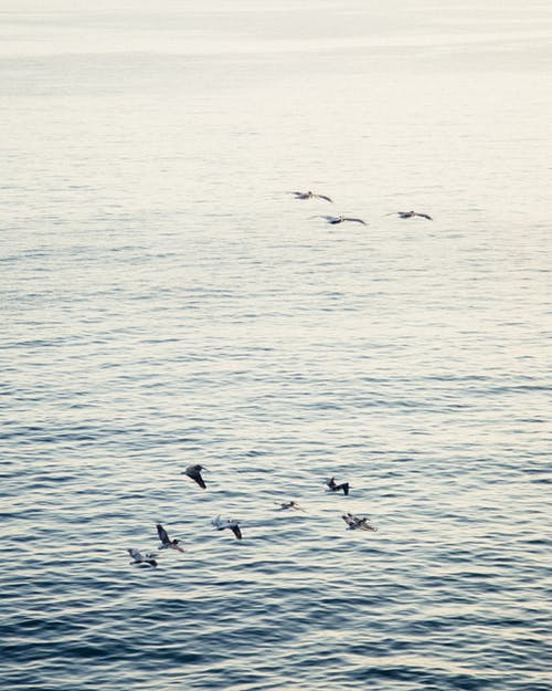 Photo of Birds Flying Across The Sea