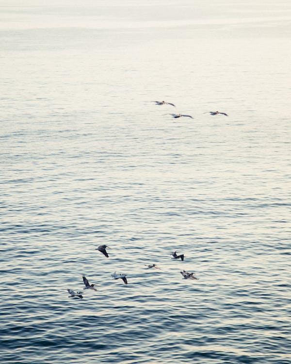 Photo of Birds Flying Across The Sea