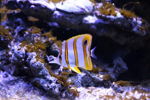 White And Yellow Fish