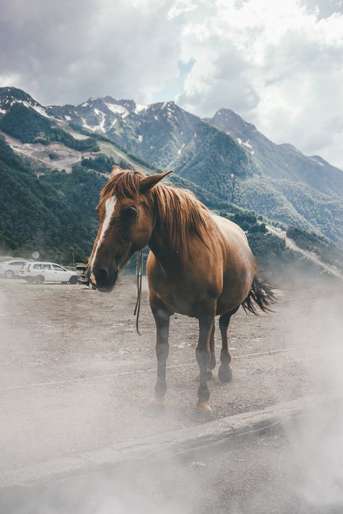 Photo of Standing Brown Horse