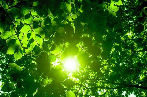 Ilmainen kuvapankkikuva tunnisteilla auringonpaiste, aurinko, hehku, lehdet