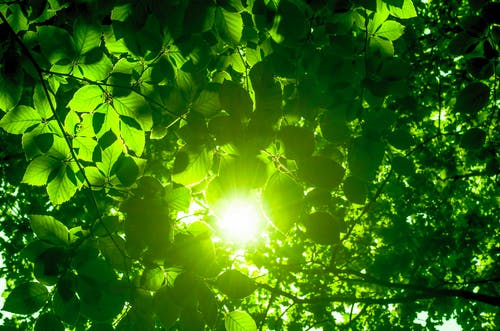 Kostnadsfri bild av bakgrund, blad, glans, grön