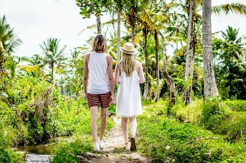 Foto d'estoc gratuïta de a l'aire lliure, arbres, Àsia, Bali
