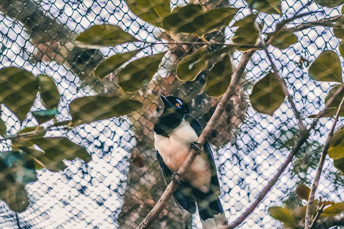 pássaro, 動物, 動物王國