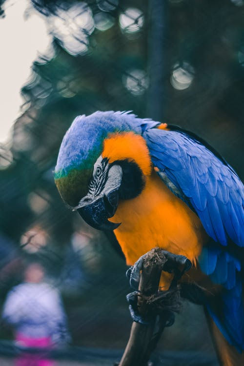 Bird Perched On Branch · Free Stock Photo