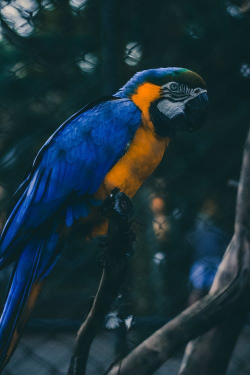 Foto d'estoc gratuïta de animal, arara, au, bellesa a la natura