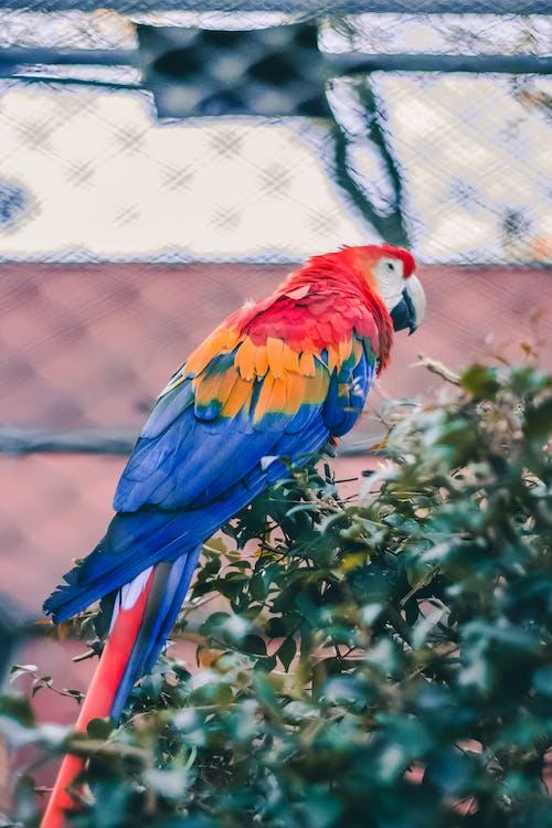 Δωρεάν στοκ φωτογραφιών με arara, Βραζιλία, ζωικό βασίλειο, ζώο