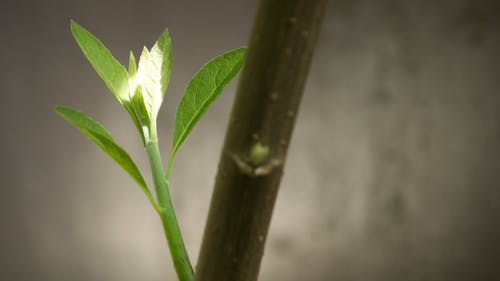 Fotobanka sbezplatnými fotkami na tému lúč slnečného svitu, osivo, príroda, rastlina