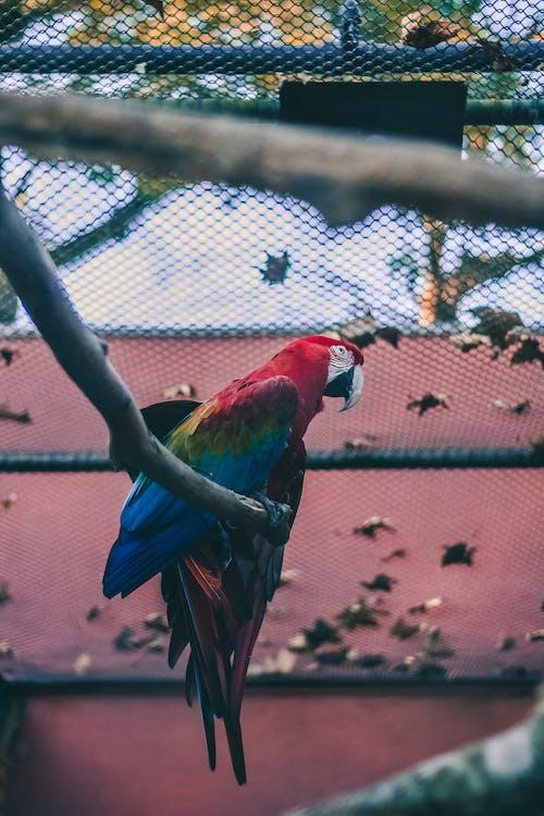 Δωρεάν στοκ φωτογραφιών με Βραζιλία, ζωικό βασίλειο, ζώο, μαύρο πουλί