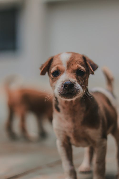 Selective Focus Photography Of A Puppy