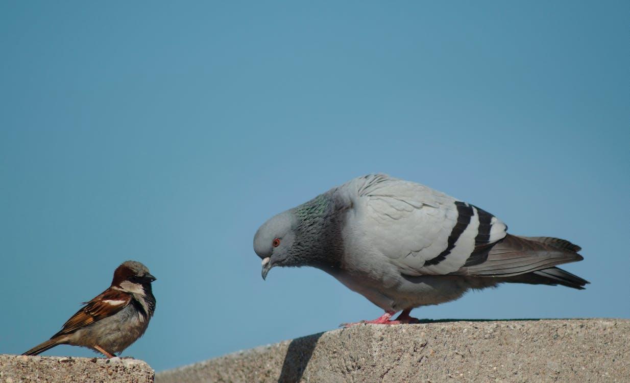 animale, natura, passero