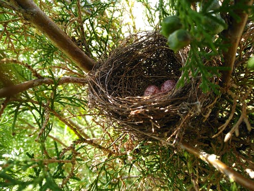 Gratis lagerfoto af æg, fuglerede, rede