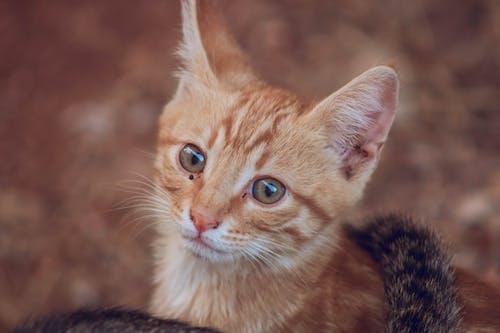 Бесплатное стоковое фото с животное, котенок, кошачьи, кошка