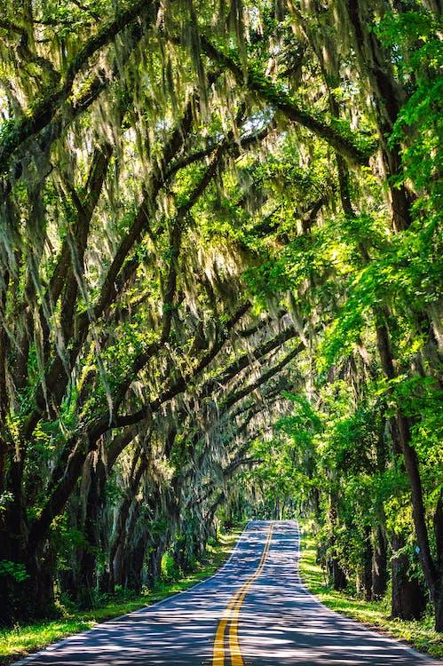 dzsungel, erdő, fák