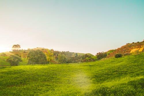 Imagine de stoc gratuită din arc, brichetă, frumos, soare auriu