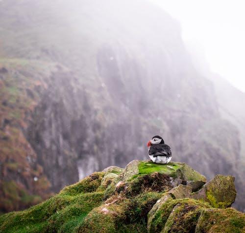 Photos gratuites de animal, aviaire, brouillard, brumeux