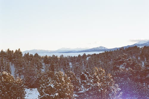 Gratis arkivbilde med skog, snø, trær, vinter