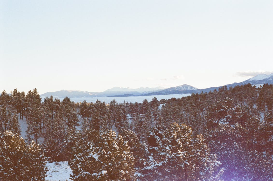 冬, 木, 森林