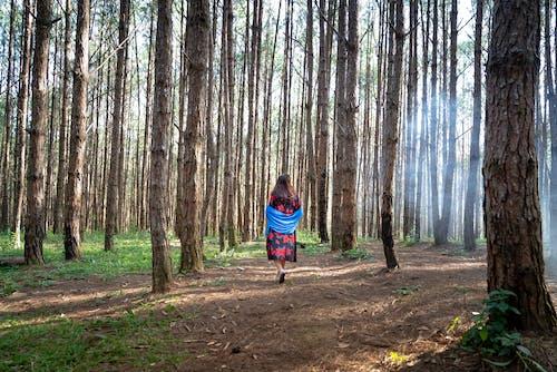 Photos gratuites de arbres, aventure, environnement, espace extérieur