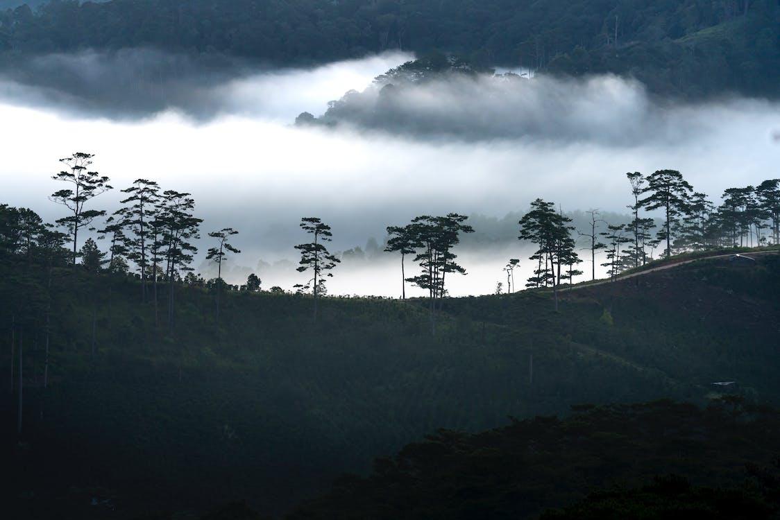 alba, albero, ambiente
