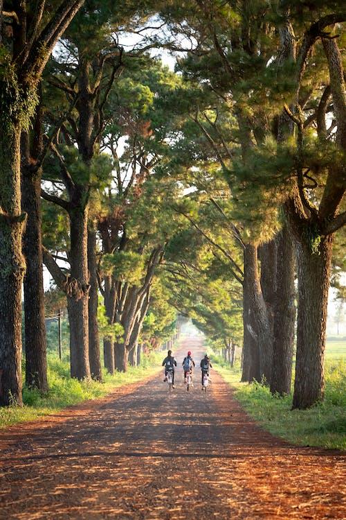 droga, drzewa, jesień