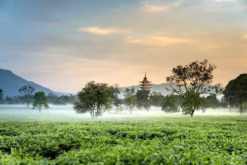 Kostnadsfri bild av åkermark, beskära, bondgård, dagsljus