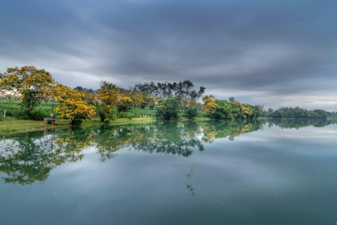 heijastus, järvi, puut