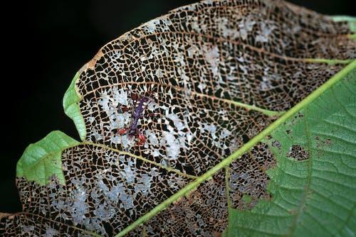 Бесплатное стоковое фото с беспозвоночный, крупный план, лист, насекомое