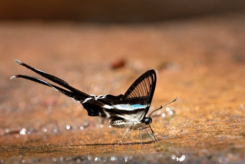 Black and White Butterfly on Sand