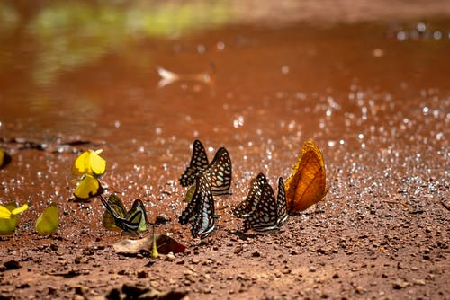 Close-Up Photo of Butterflies On Ground