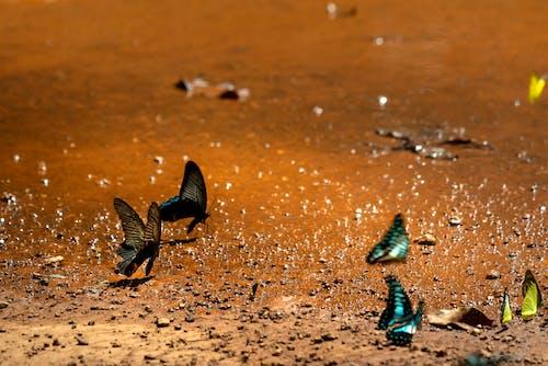 Photos gratuites de boue, insectes, papillons, terre