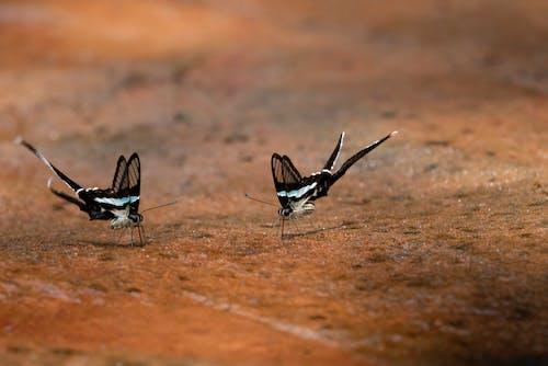 Kostnadsfri bild av fjärilar, insekt, jord, liten