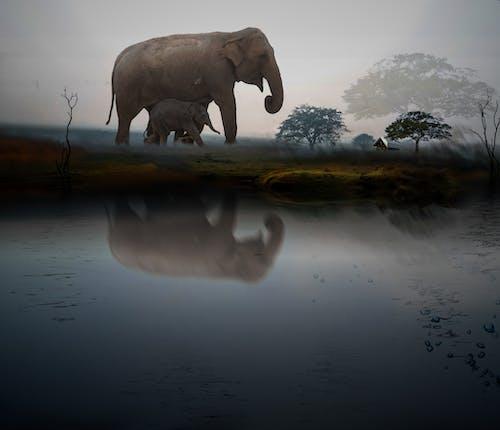 ë, 動物, 大自然, 大象 的 免費圖庫相片