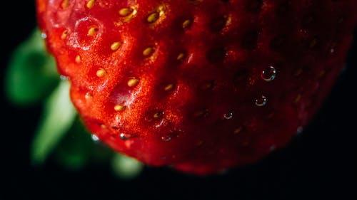 Kostenloses Stock Foto zu erdbeere, frucht, spritzen, wasser