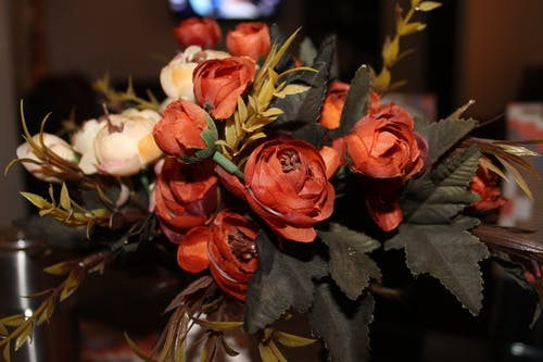 Ảnh lưu trữ miễn phí về cắm hoa, cận cảnh, cánh hoa, đẹp