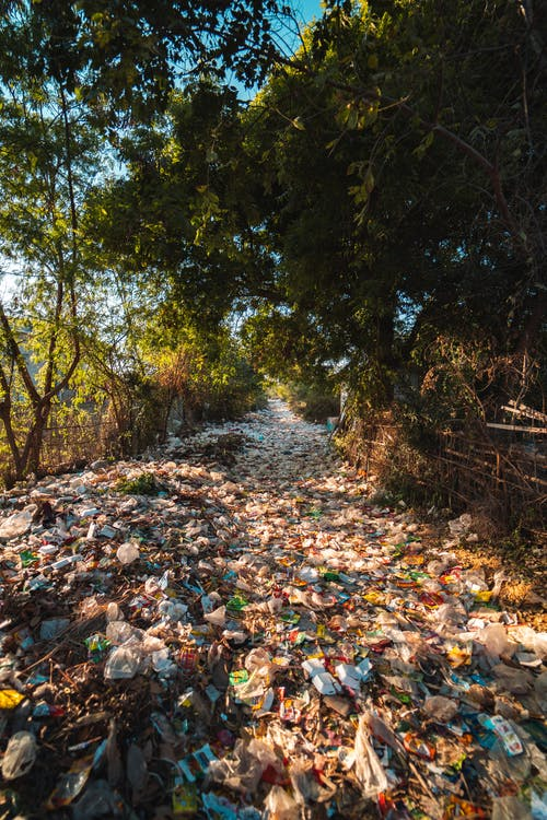 Photo of Plastics Near Trees