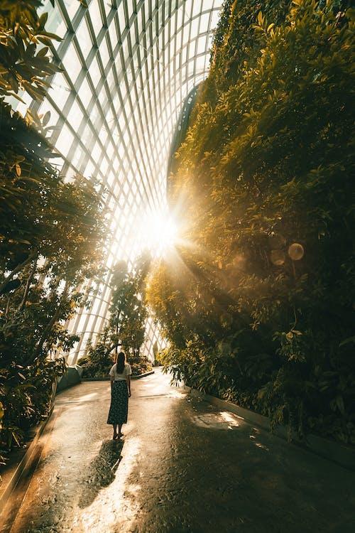 botanická záhrada, cesta, cestovať