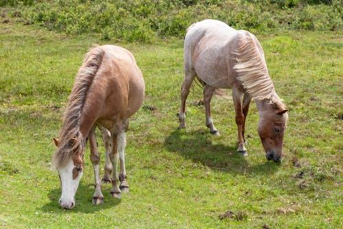 Ảnh lưu trữ miễn phí về cỏ, động vật, màu xanh lá, ngựa