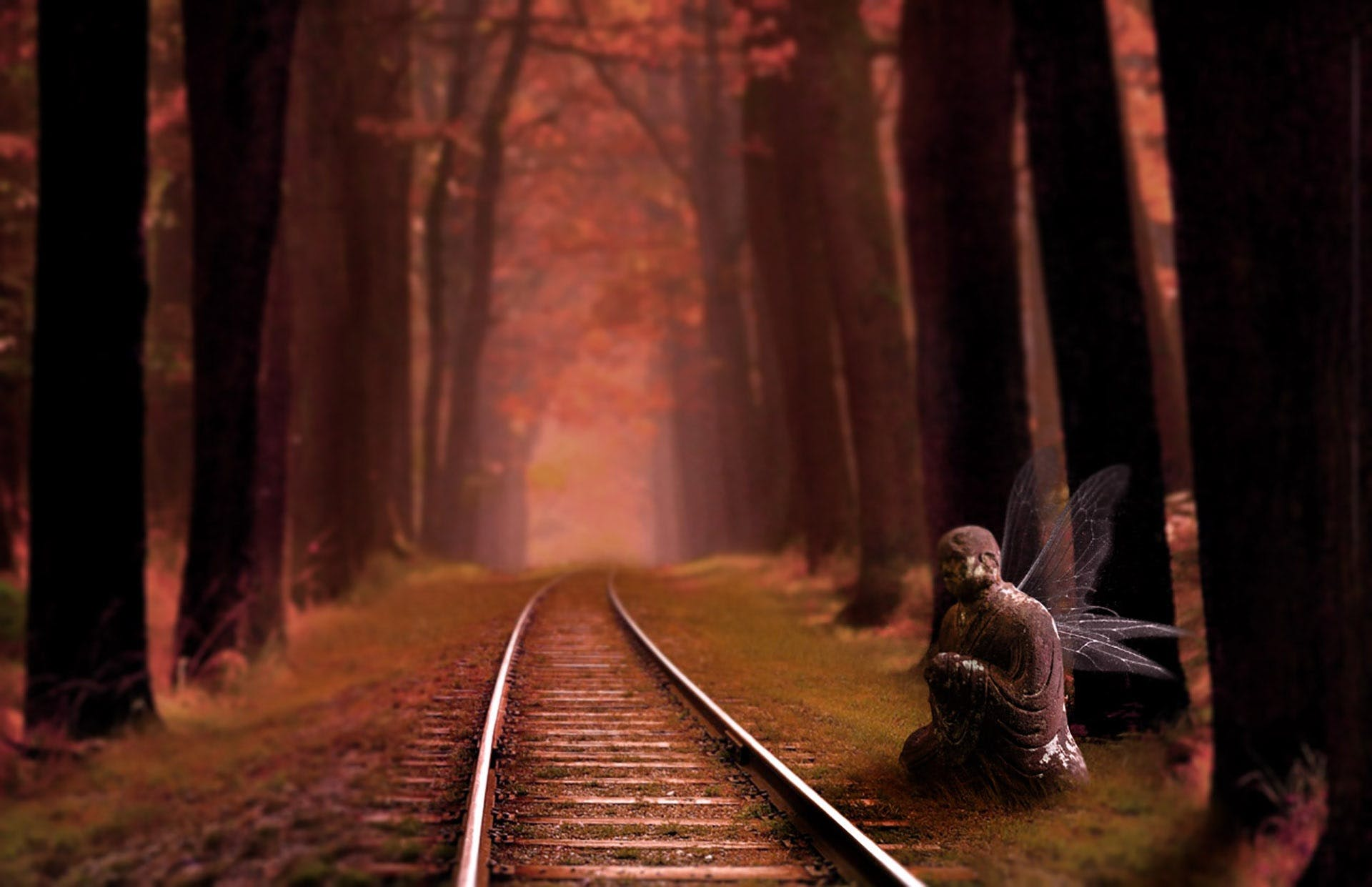 Railroad Track in Forest at Night