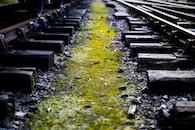 train, moss, travel
