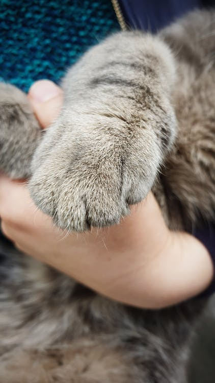 Evcil Hayvanlar, hayvanlar, kedi