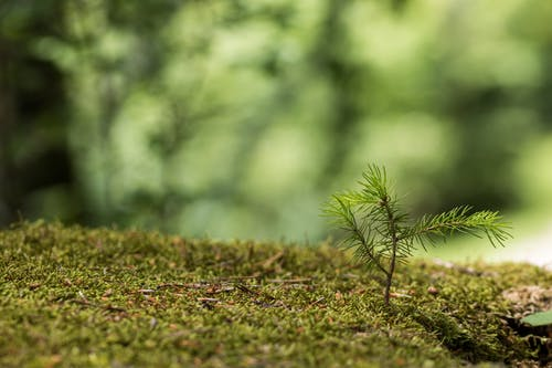 Fotos de stock gratuitas de botánica, botánico, concentrarse, crecimiento