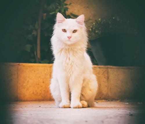 Gratis lagerfoto af kat, katte