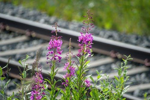 フラワーズ, フローラ, 咲く, 工場の無料の写真素材